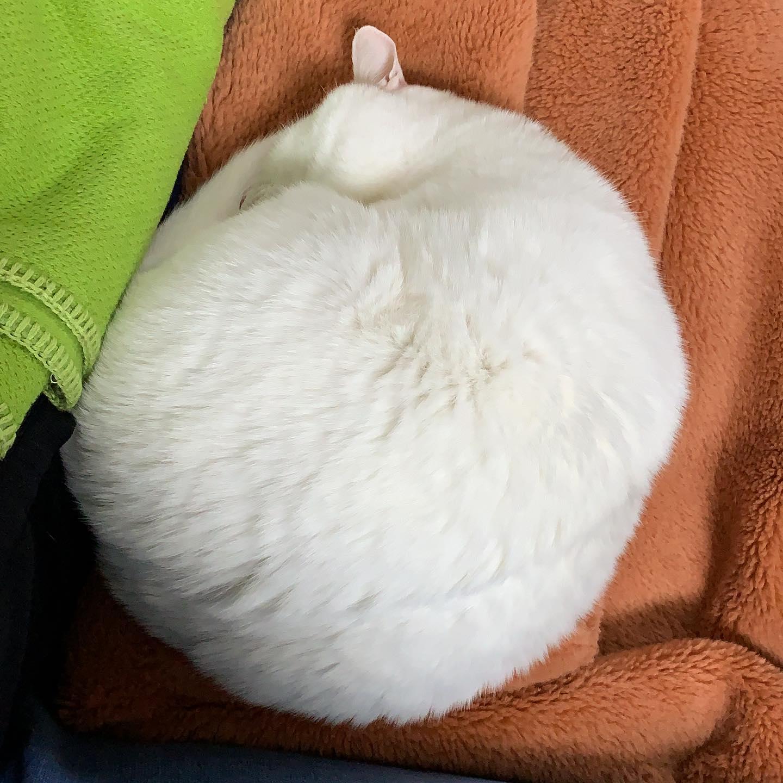 ほぼ猫(固定タイトル)